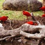 Парк птиц в «Чимелонге»