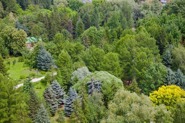 Омский дендропарк, вид сверху