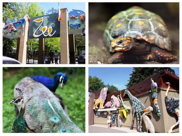 Зоопарк «Бэняса» в Бухаресте