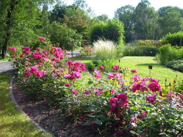 Ландшафт ботанического сада