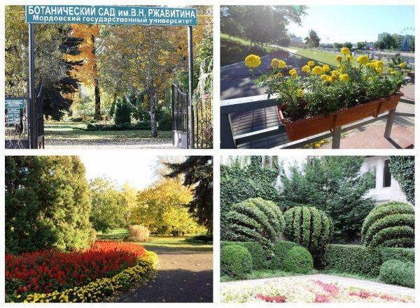 Ботанический сад имени Ржавитина в Саранске