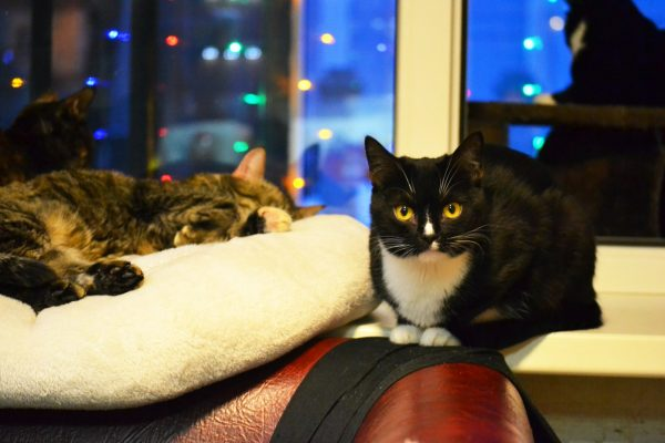Коты в зале котокафе Mr. Moore