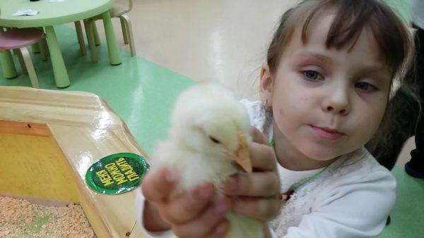 Девочка держит птенца