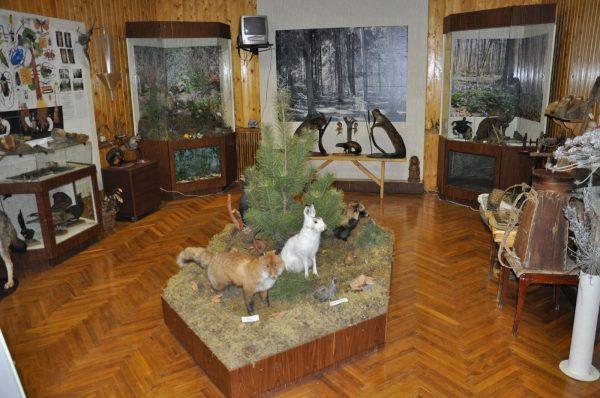 Музей леса «Лесные истоки»