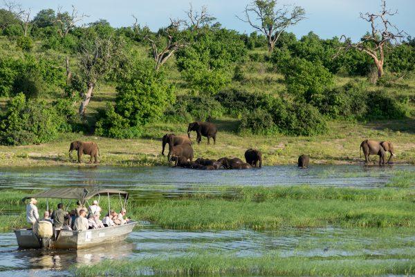 Туристы любуются с катера слонами