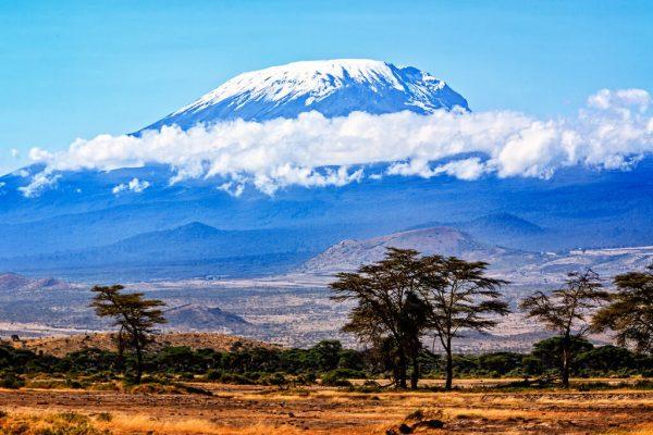 Растительность саванны на фоне горы Килиманджаро
