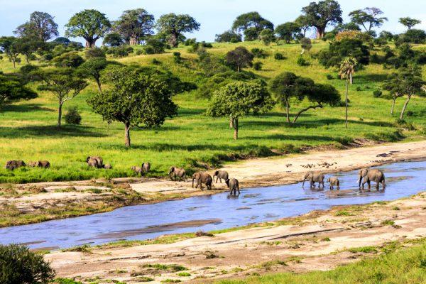 Слоны на водопое в парке Серенгети