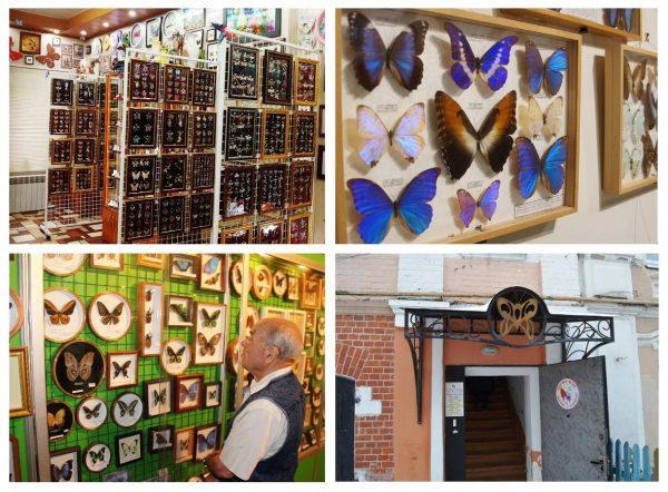 Квартира-музей «Бабочки и стрекозы»