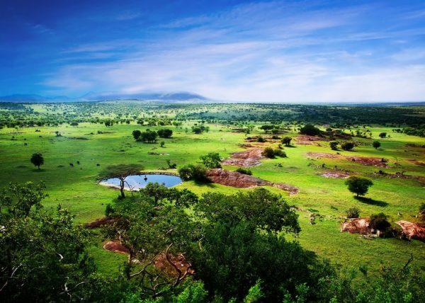 Растительность в окружении природных пейзажей в Танзании
