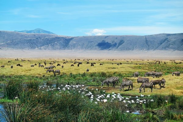 Зебры пасутся в саванне, расположенной в вулканическом кратере