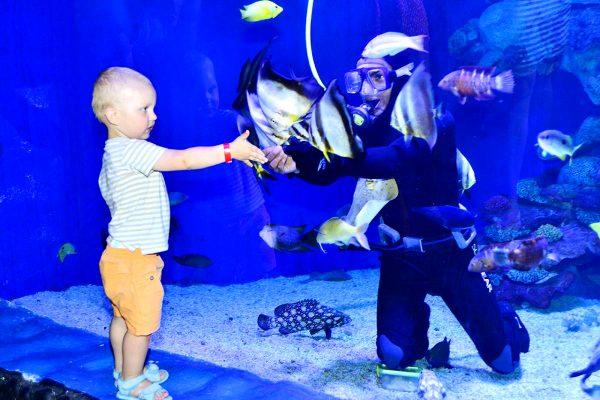 Мальчик протягивает руку водолазу, находящемуся в аквариуме морского парка