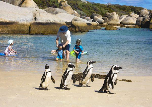 Пингвины идут по пляжу