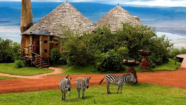 Зебры возле бунгало