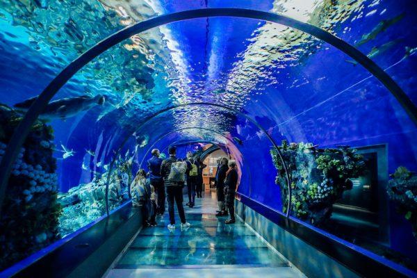 Стеклянный тоннель в океанариуме Копенгагена