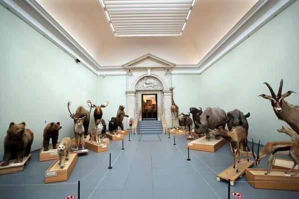 Зал музея зоологии