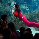 Аквалангист в костюме русалки