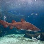Акула в критском аквариуме