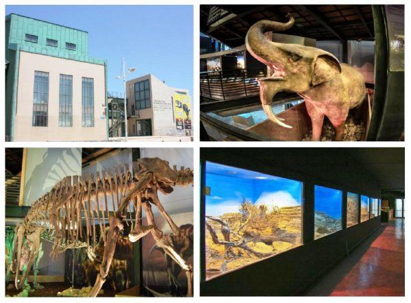 Музей естественной истории в Ираклионе