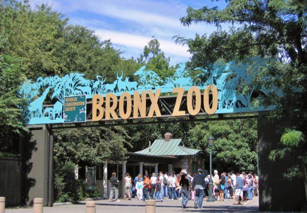 Зоопарк Бронкса