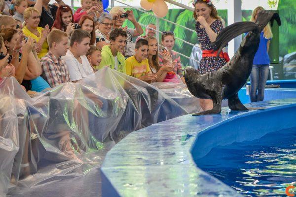 Дельфинарий Нижнего Новгорода