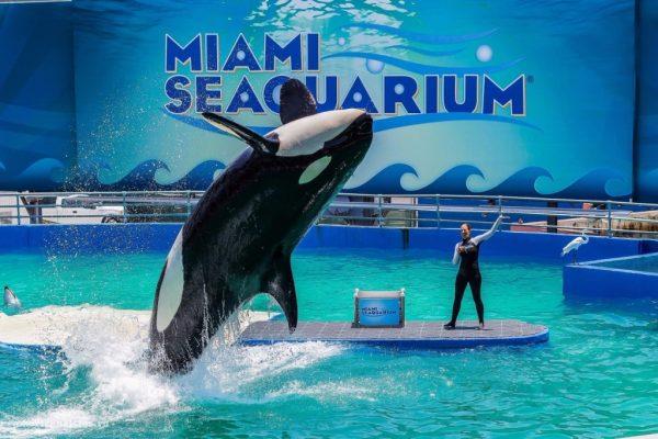 Морской аквариум Майами
