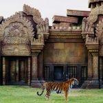 Тигр в зоопарке Майами