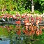 Парк фламинго в зоопарке Майами