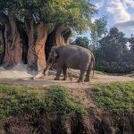 Слон в зоопарке Майами