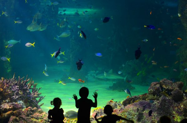Дети в океанариуме