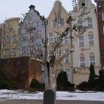 Дерево миллениума