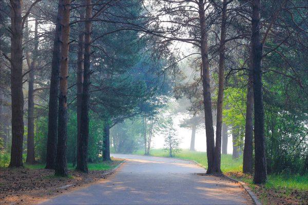 Парк Сайма в Сургуте