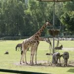Гданьский зоопарк