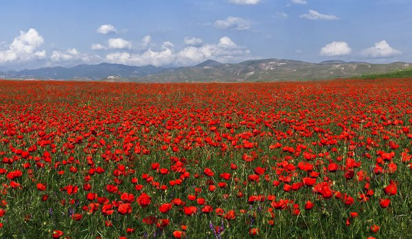 Весна в Узбекистане