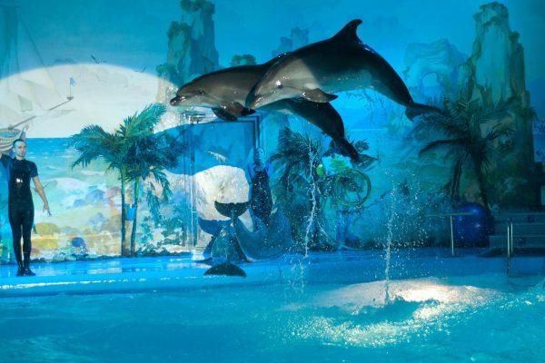 Дельфинарий в Парке Лунный свет
