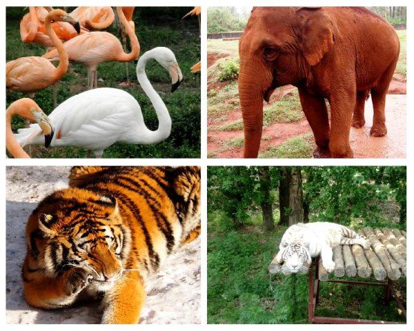 Зоопарк «Северный лес» в Харбине